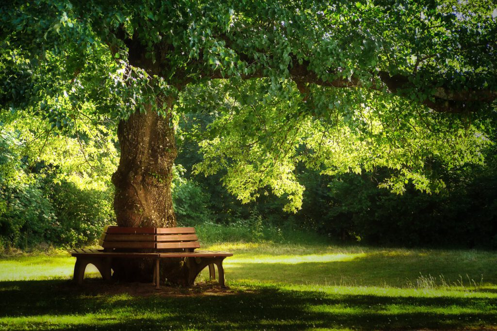 tree, nature, park